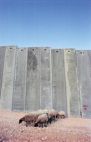 Palestine Faridahamak